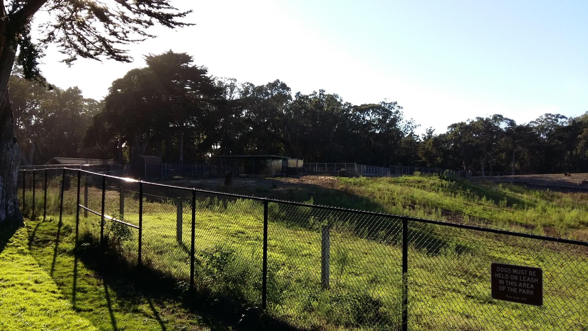 golden gate park bison paddock