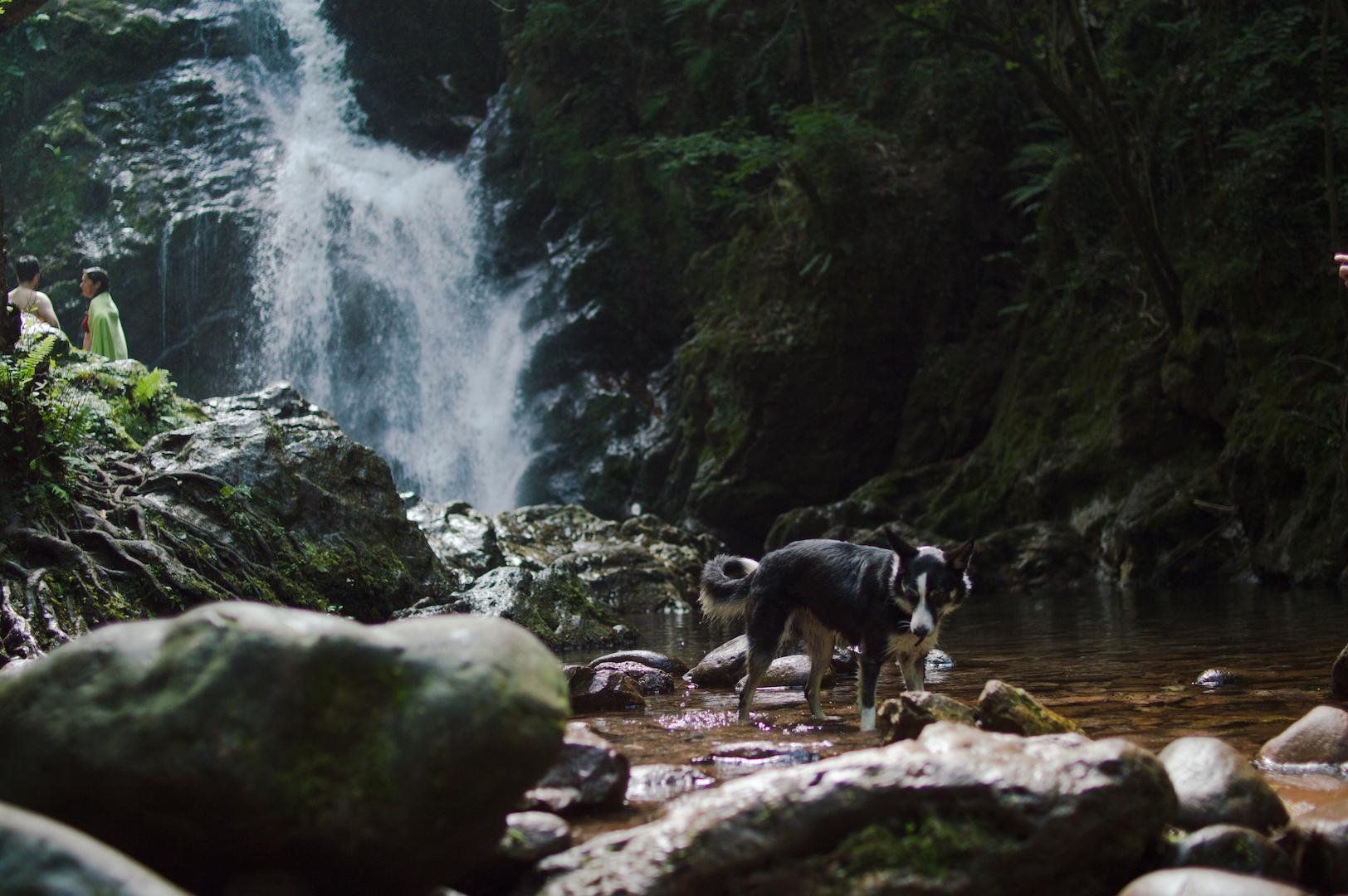 Con animales en la Cascada Xorroxin