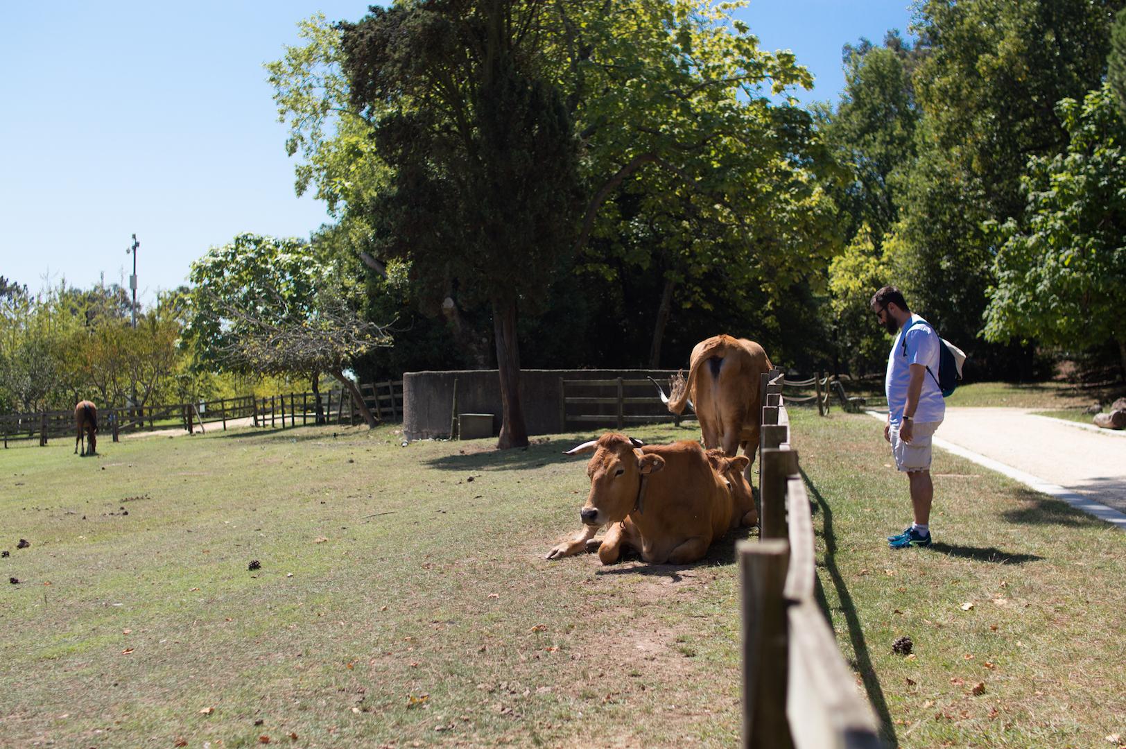 Animales Casa Serralves
